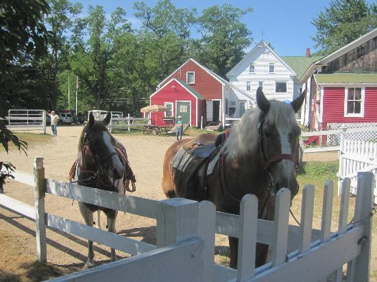 Farm by the River Bed and Breakfast with Stables: Abby and her boyfriend