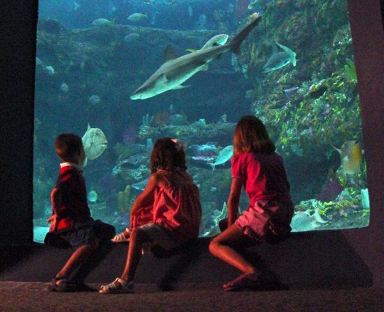 Wilmington Nc Aquarium At Fort Fisher