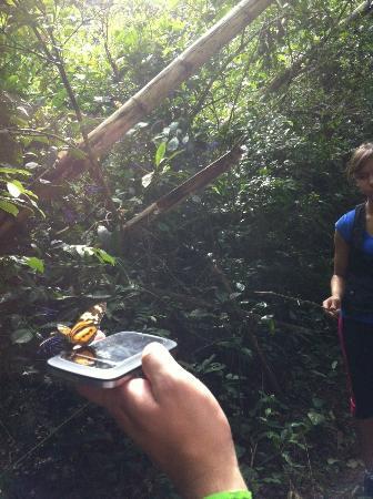 Poco Preto trail: Muita variedade e proximidade de borboletas