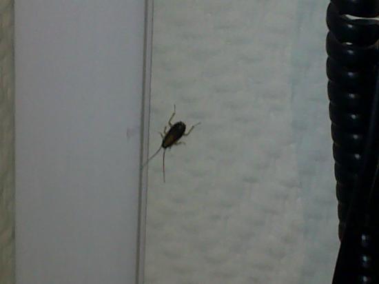 Cucaracha en la habitación 112 Plug-Inn Hostel