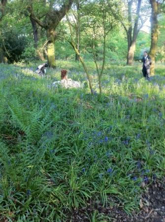 The Morley Hayes Hotel: bride in the bluebell woods on the golf course