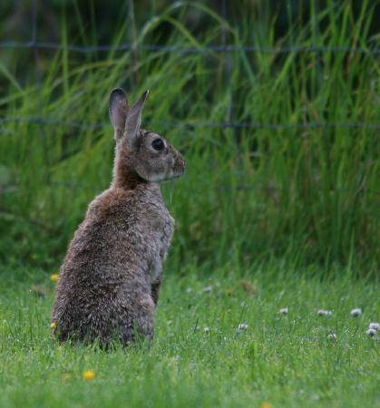 Woodlands B&B: The Head Rabbit