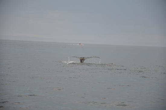 Groupe Dufour Cruises : Elle amorce sa plongée