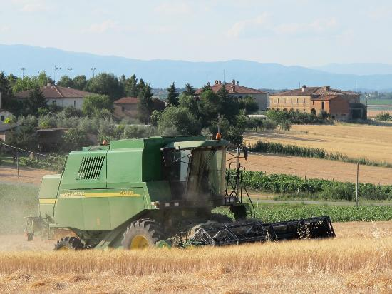 Villa Rosa dei Venti: Stefano cutting the wheat