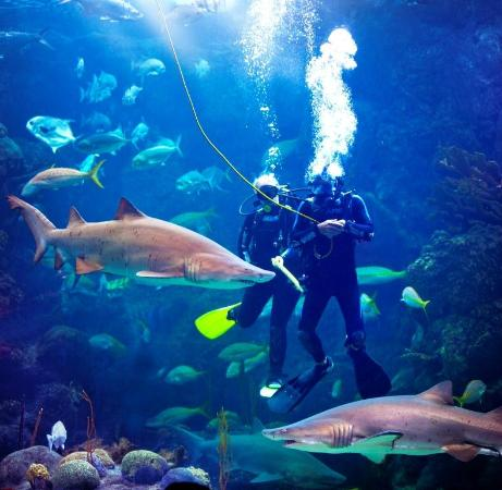 The Florida Aquarium Tampa All You Need To Know Before