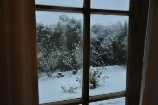 Featherstone B&B: view into the garden after snowfall in the night
