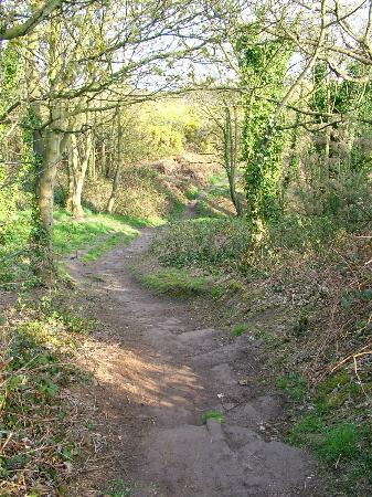 West Kirby, UK: Path through Caldy Hills.