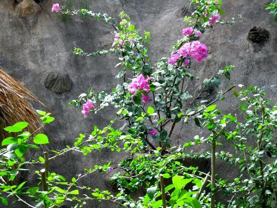Los Altos de Eros: beautiful flowers in spa