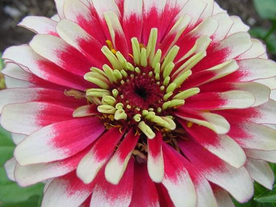 Annual Flower Trial Garden: up close and colorful