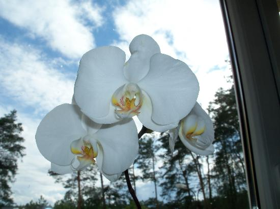 Hotel Best Inn : Beautiful live orchid