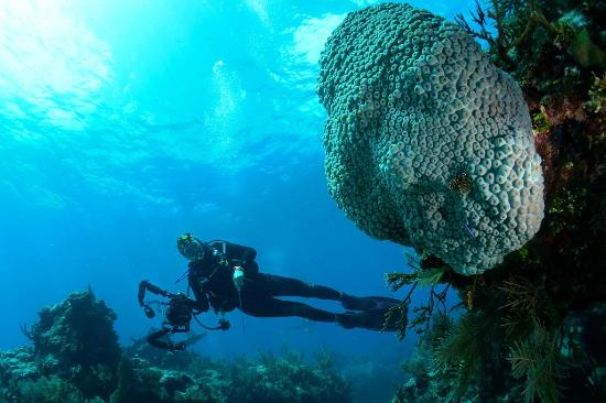 Blue Water Divers : Looking for photo subjects