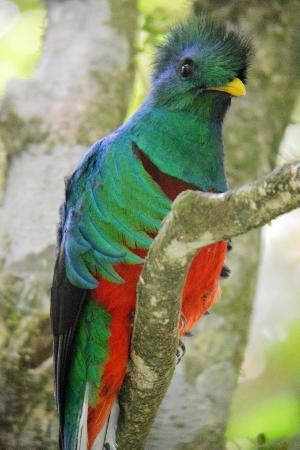 Reserva Curi-Cancha: Quetzal