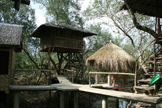Babatngon, Filippinene: The treehouses you can rent for the night.