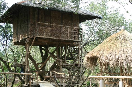 Paru Parong Bukid Nature Conservation Center: The treehouses you can rent for the night.