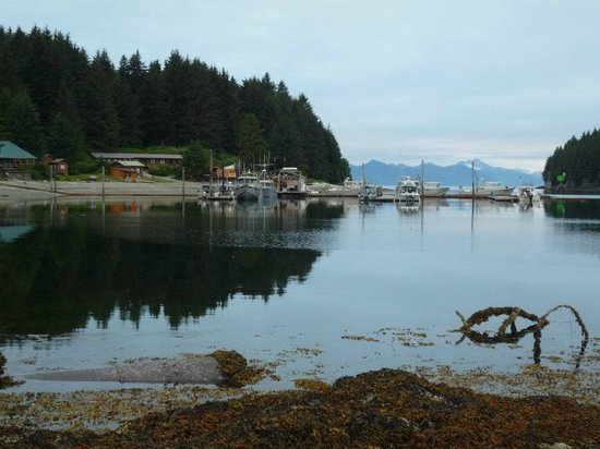 Whalers Cove Lodge: Looking toward the lodge with the fishing fleet in the back ground