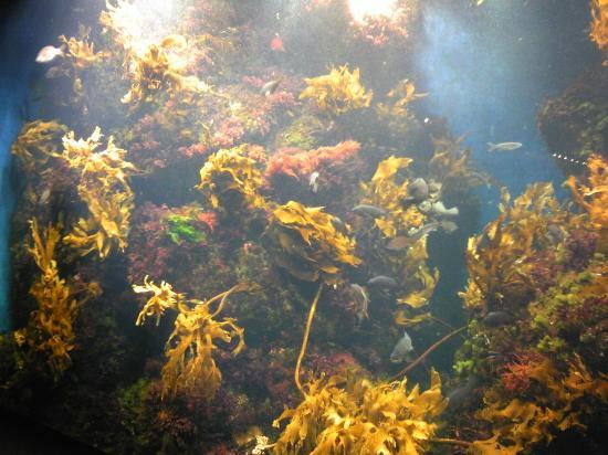 Enoshima Aquarium: 12.06.22【新江ノ島水族館】海藻