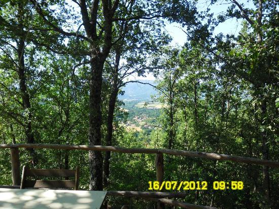 Mugello : View through the tree's