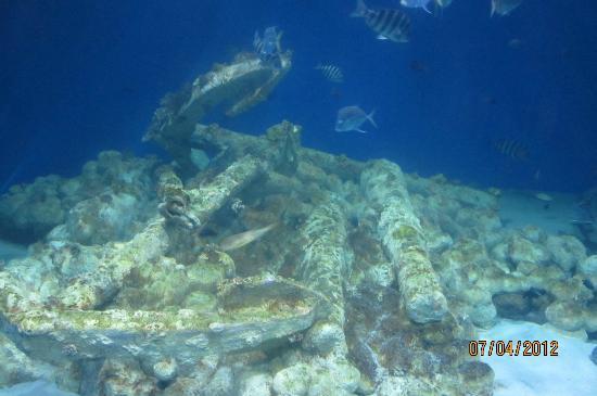 El Cocodrilo Picture Of North Carolina Aquarium At Pine