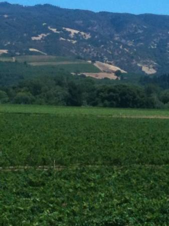 Rivino Winery: breathtaking views