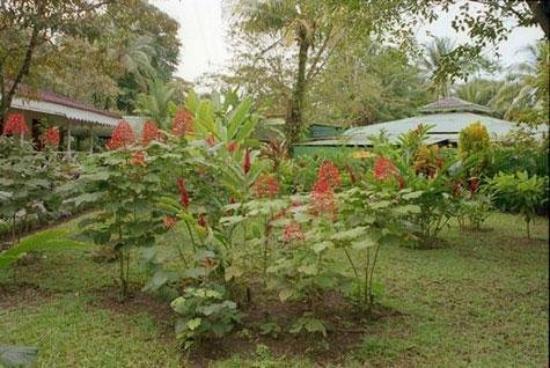 Tortuguero Jungle Lodge: GARDEN