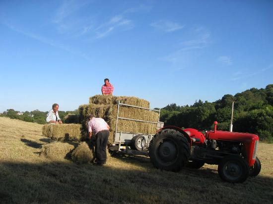 Poltarrow Farm: Making hay while the sun shines