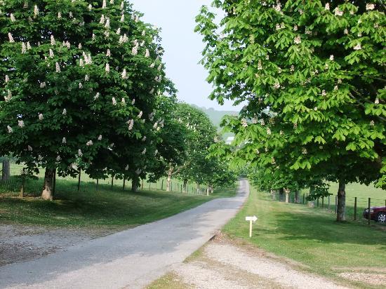 Poltarrow Farm: Front Drive