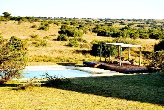 Hlosi Game Lodge: Pool