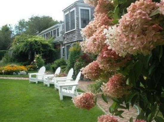 Honeysuckle Hill: Hydrangeas are in bloom.