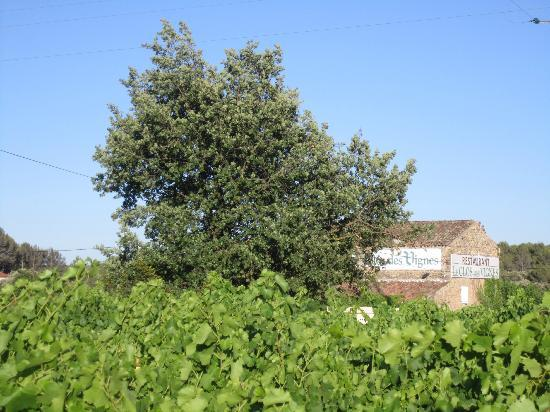 Le Clos des vignes : Outside..surrounded by a wineyard