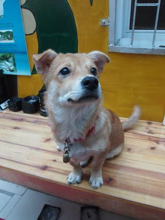 Sanya Backpackers: Mimi, the owners' dog