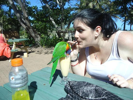 Keppel Haven: Sharing my smoothie with the lorrikeets!!