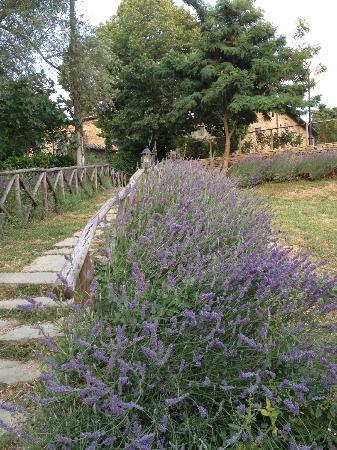 Hotel Badia di Pomaio: Path from parking lot