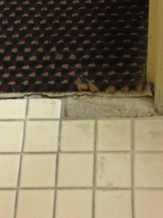 Days Inn Bradenton I-75: Missing floor tile