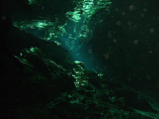 Geofish Dive: Dos Ojos centote