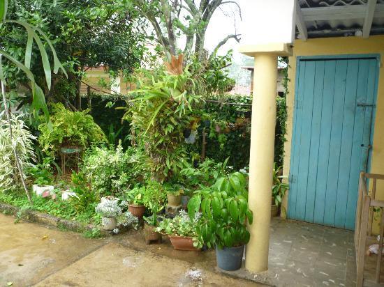 Villa Teresa: Garden