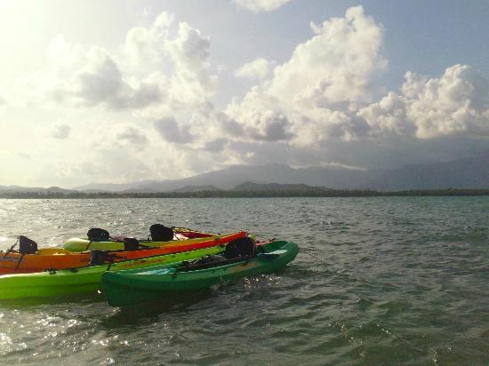 Barefoot Travelers Rooms: Ocean kayaks at Monkey Island