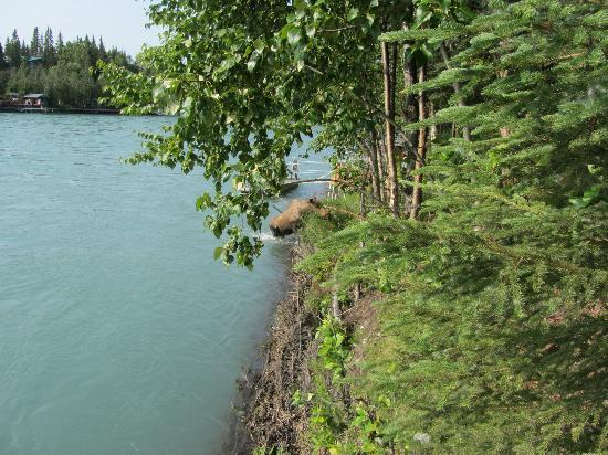 Alaska Fishing Lodge - Soldotna Bed and Breakfast Lodge: View from dock at Kenai river - moose is getting out of the river