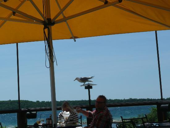 Bistro on the Green: Seagull at the restaurant