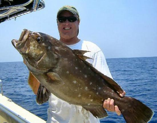To many fish free dating site