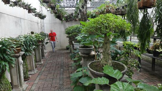 Babylon Bangkok: Garden nursery