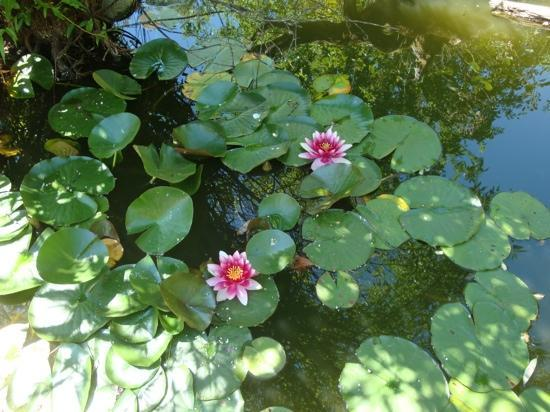 Orleans, Californien: Garden pond