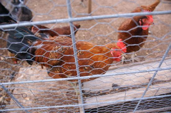 Juniper Well Ranch: You cabin is equipped with kitchenette - hen house equipped with eggs