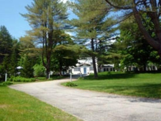 Arcady at the Sunderland Lodge: our south drive-way