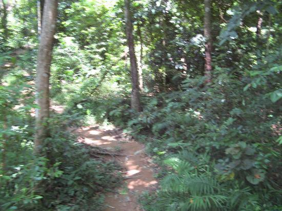 KokChang Safari Elephant Trekking: Heading into the Jungle