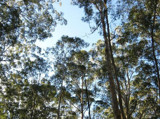 Boranup Karri Forest: Treetops