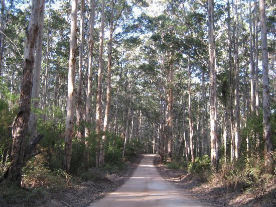 Australia Plains, Australia: Bush tracks through Boranup Forest