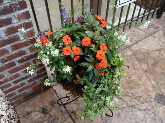 Holiday Inn Express Hotel & Suites Mt Pleasant-Charleston: Flowers Around the Pool