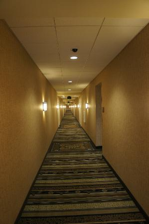 Homewood Suites by Hilton Minneapolis-New Brighton : Hallway