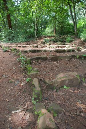 Nairobi Arboretum: Rough steps through the park