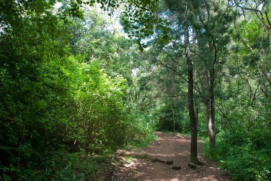 Nairobi Arboretum: A nice park in Nairobi